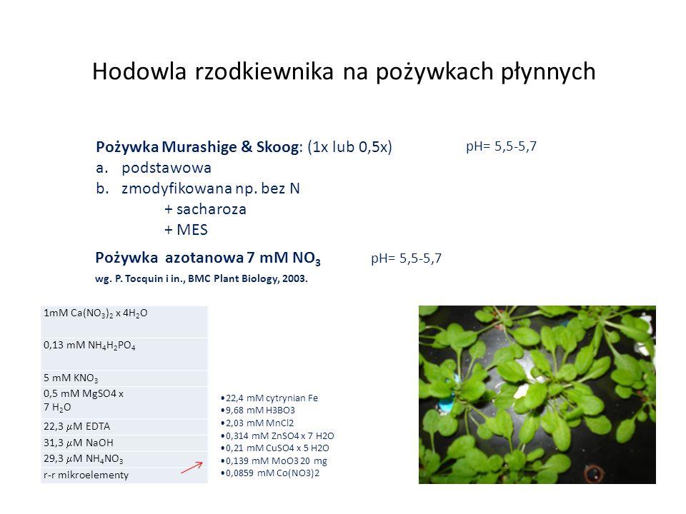 Hodowla rzodkiewnika na pożywkach płynnych Pożywka Murashige & Skoog: (1x lub 0,5x) a.podstawowa b.zmodyfikowana np. bez N + sacharoza + MES Pożywka a
