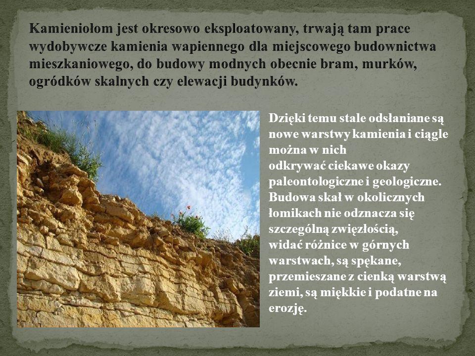 Dzięki temu stale odsłaniane są nowe warstwy kamienia i ciągle można w nich odkrywać ciekawe okazy paleontologiczne i geologiczne. Budowa skał w okoli