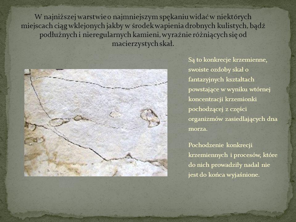 Są to konkrecje krzemienne, swoiste ozdoby skał o fantazyjnych kształtach powstające w wyniku wtórnej koncentracji krzemionki pochodzącej z części org