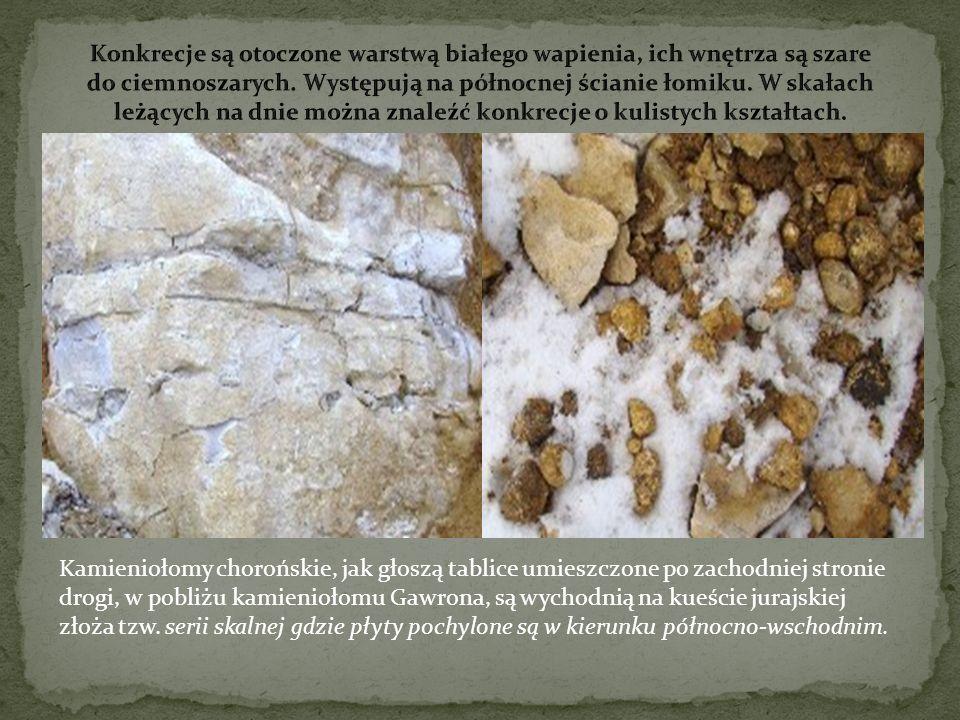 Kamieniołomy chorońskie, jak głoszą tablice umieszczone po zachodniej stronie drogi, w pobliżu kamieniołomu Gawrona, są wychodnią na kueście jurajskie