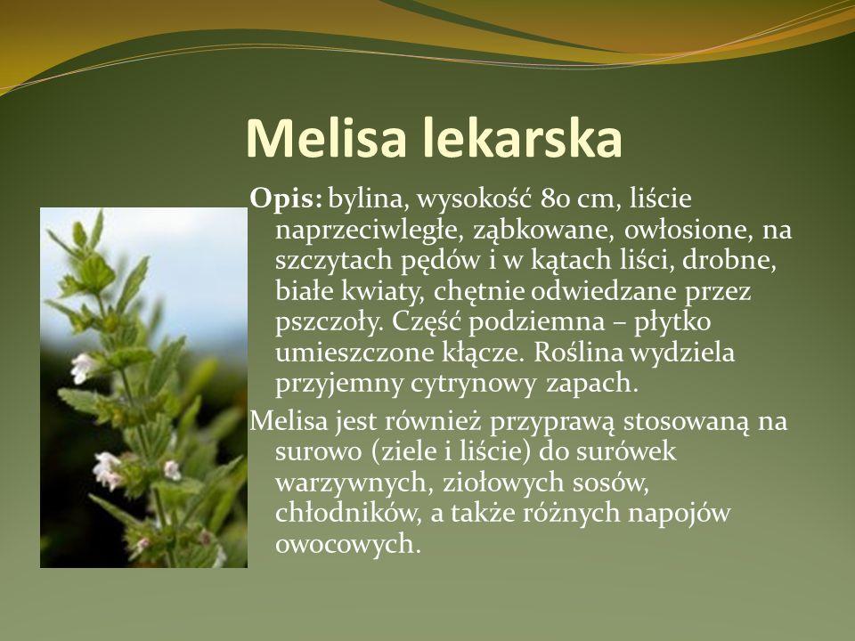 Melisa lekarska Opis: bylina, wysokość 80 cm, liście naprzeciwległe, ząbkowane, owłosione, na szczytach pędów i w kątach liści, drobne, białe kwiaty,