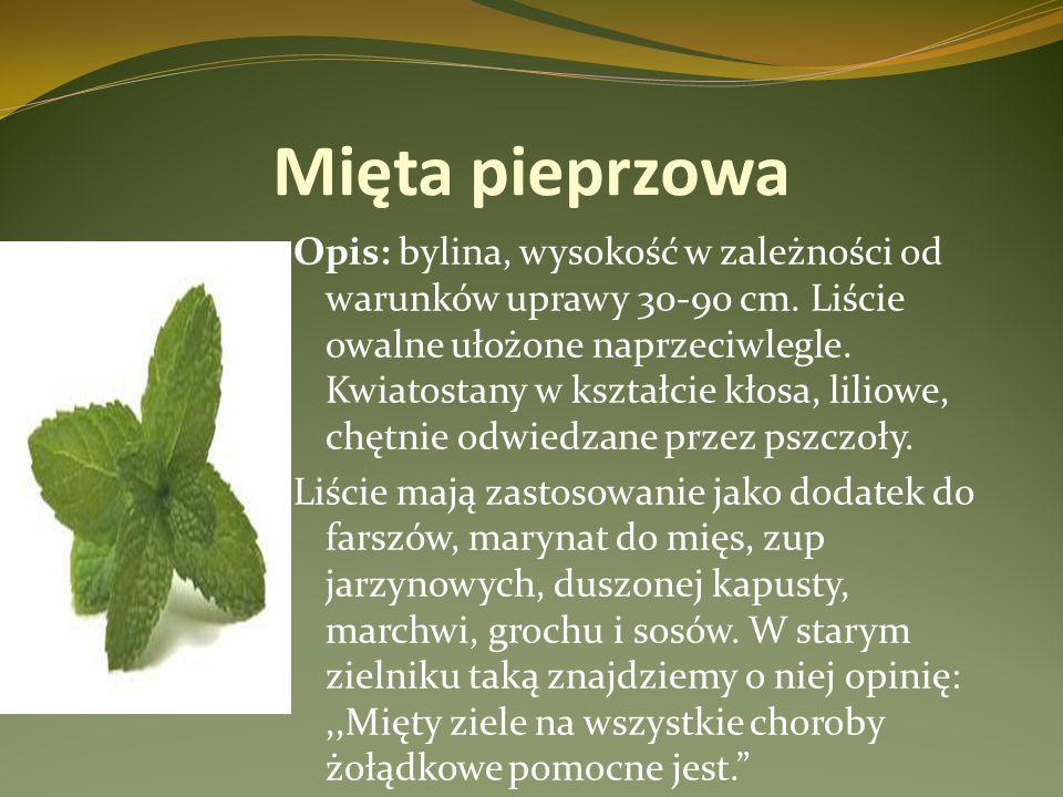 Mięta pieprzowa Opis: bylina, wysokość w zależności od warunków uprawy 30-90 cm. Liście owalne ułożone naprzeciwlegle. Kwiatostany w kształcie kłosa,