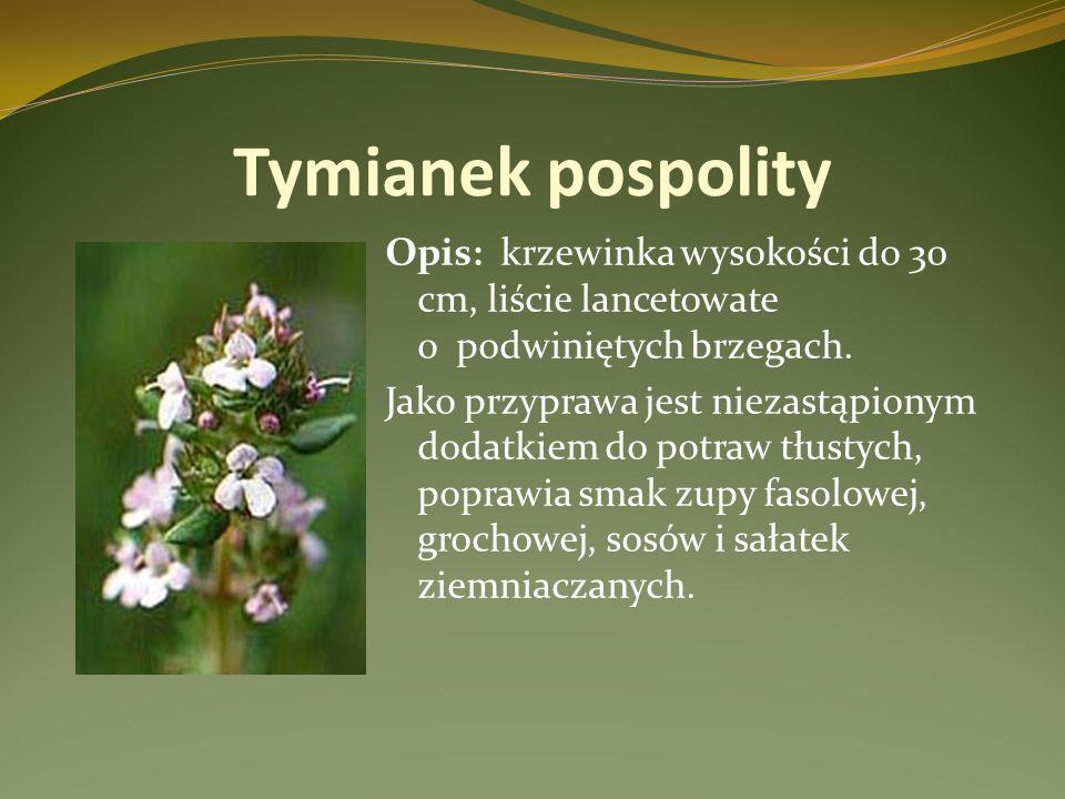 Tymianek pospolity Opis: krzewinka wysokości do 30 cm, liście lancetowate o podwiniętych brzegach. Jako przyprawa jest niezastąpionym dodatkiem do pot