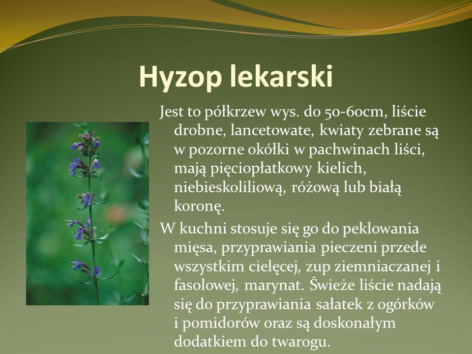 Hyzop lekarski Jest to półkrzew wys. do 50-60cm, liście drobne, lancetowate, kwiaty zebrane są w pozorne okółki w pachwinach liści, mają pięciopłatkow