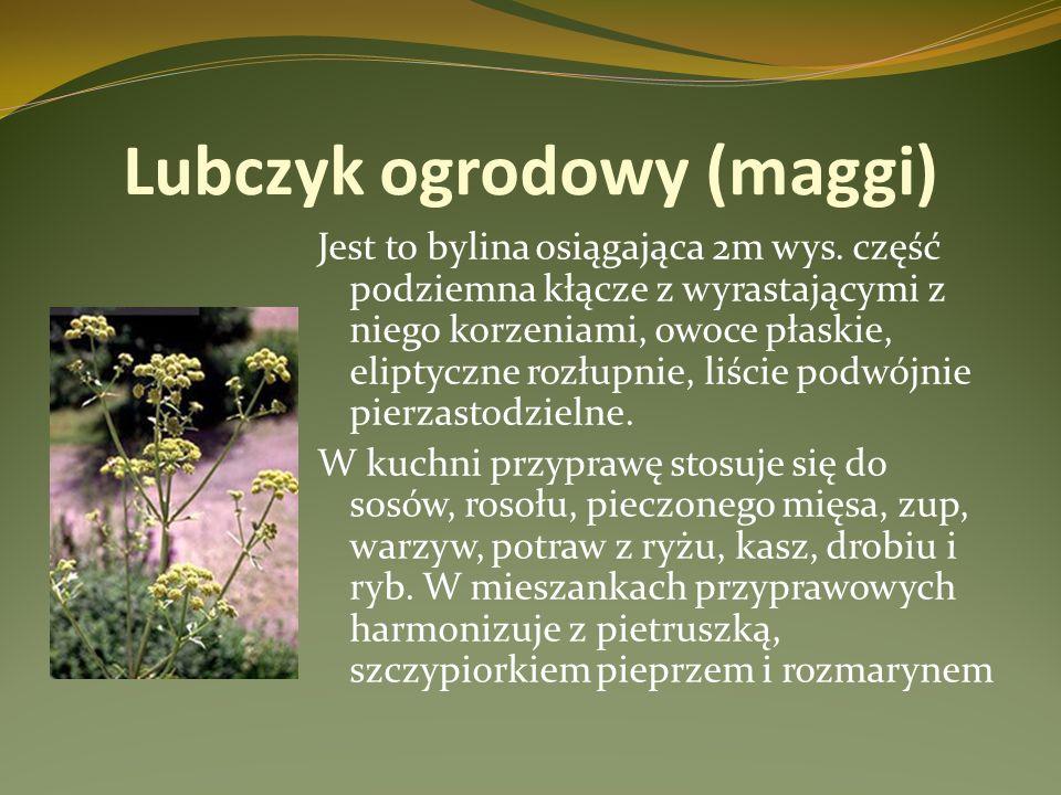 Lubczyk ogrodowy (maggi) Jest to bylina osiągająca 2m wys. część podziemna kłącze z wyrastającymi z niego korzeniami, owoce płaskie, eliptyczne rozłup