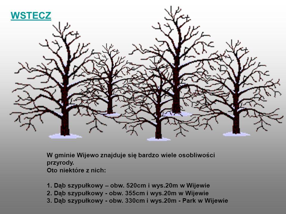 W gminie Wijewo znajduje się bardzo wiele osobliwości przyrody. Oto niektóre z nich: 1. Dąb szypułkowy – obw. 520cm i wys.20m w Wijewie 2. Dąb szypułk