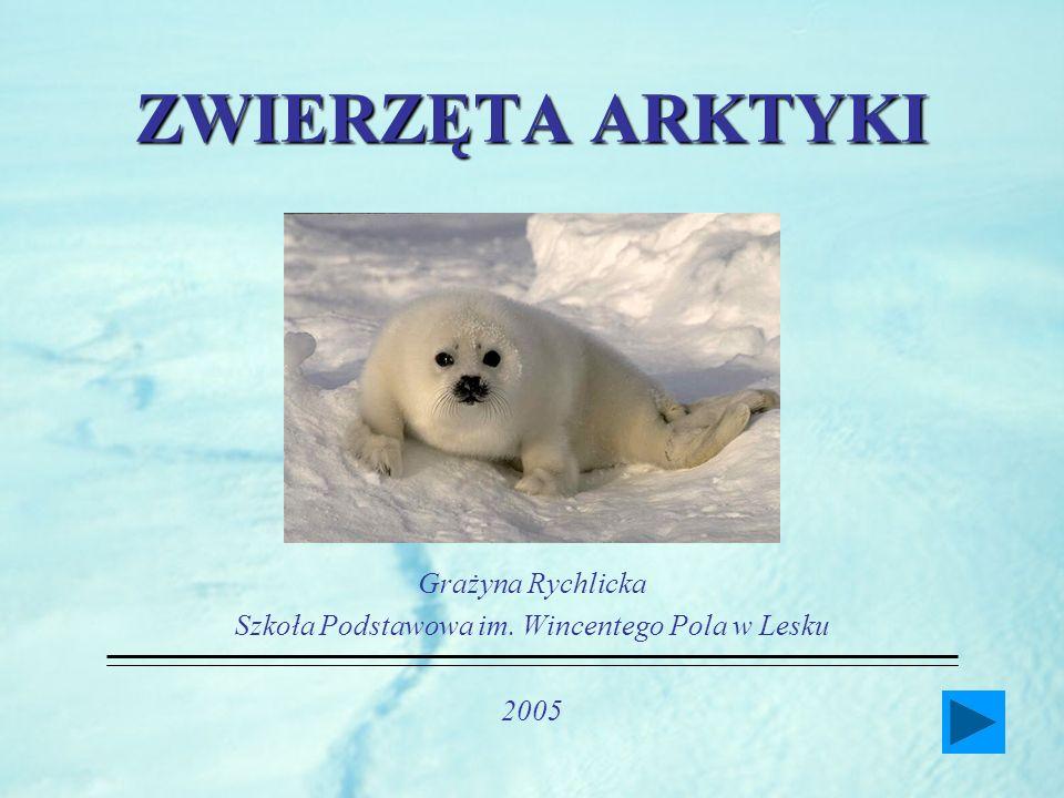 ZWIERZĘTA ARKTYKI Grażyna Rychlicka Szkoła Podstawowa im. Wincentego Pola w Lesku 2005