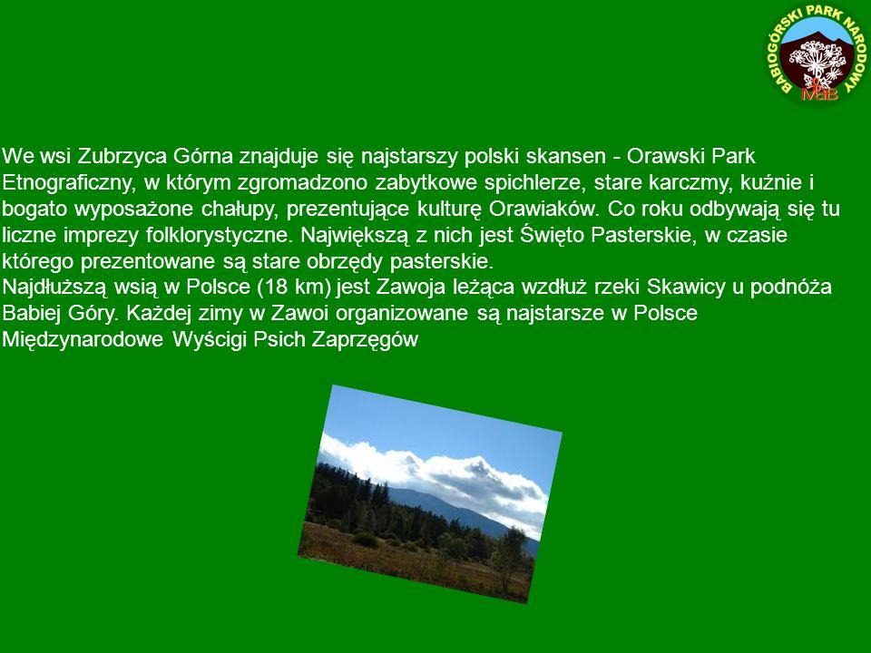 We wsi Zubrzyca Górna znajduje się najstarszy polski skansen - Orawski Park Etnograficzny, w którym zgromadzono zabytkowe spichlerze, stare karczmy, kuźnie i bogato wyposażone chałupy, prezentujące kulturę Orawiaków.