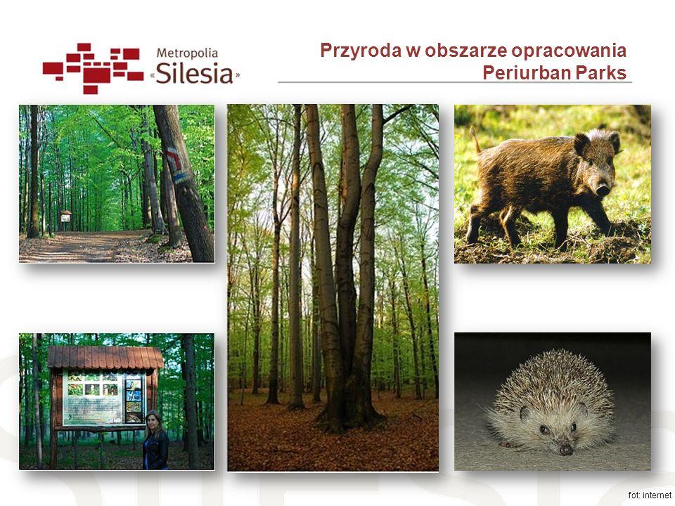 Przyroda w obszarze opracowania Periurban Parks fot: internet