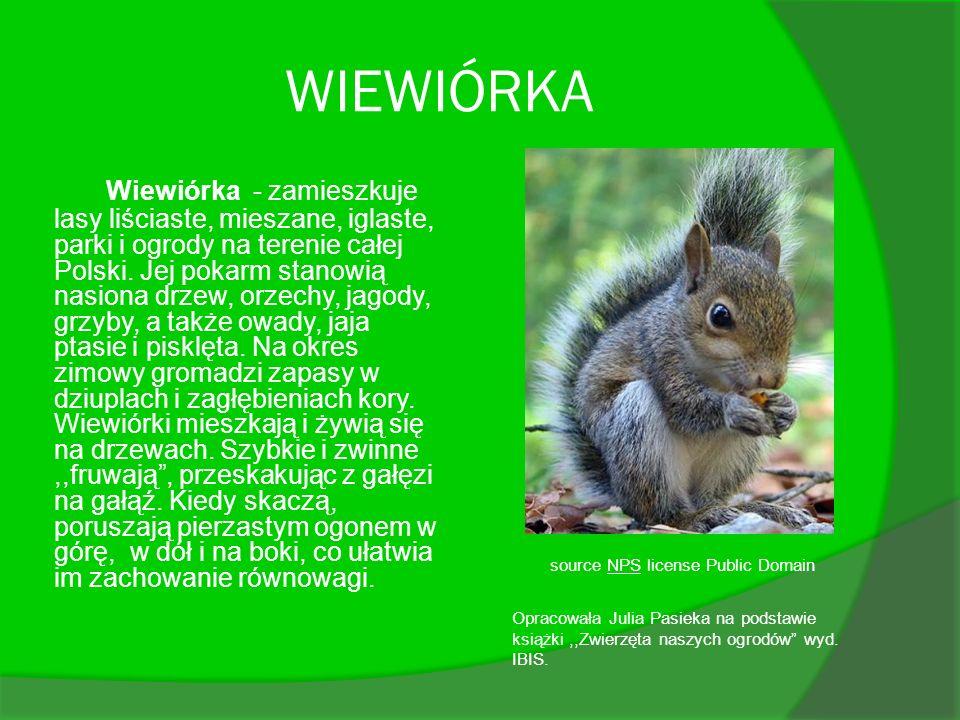 WIEWIÓRKA Wiewiórka - zamieszkuje lasy liściaste, mieszane, iglaste, parki i ogrody na terenie całej Polski. Jej pokarm stanowią nasiona drzew, orzech