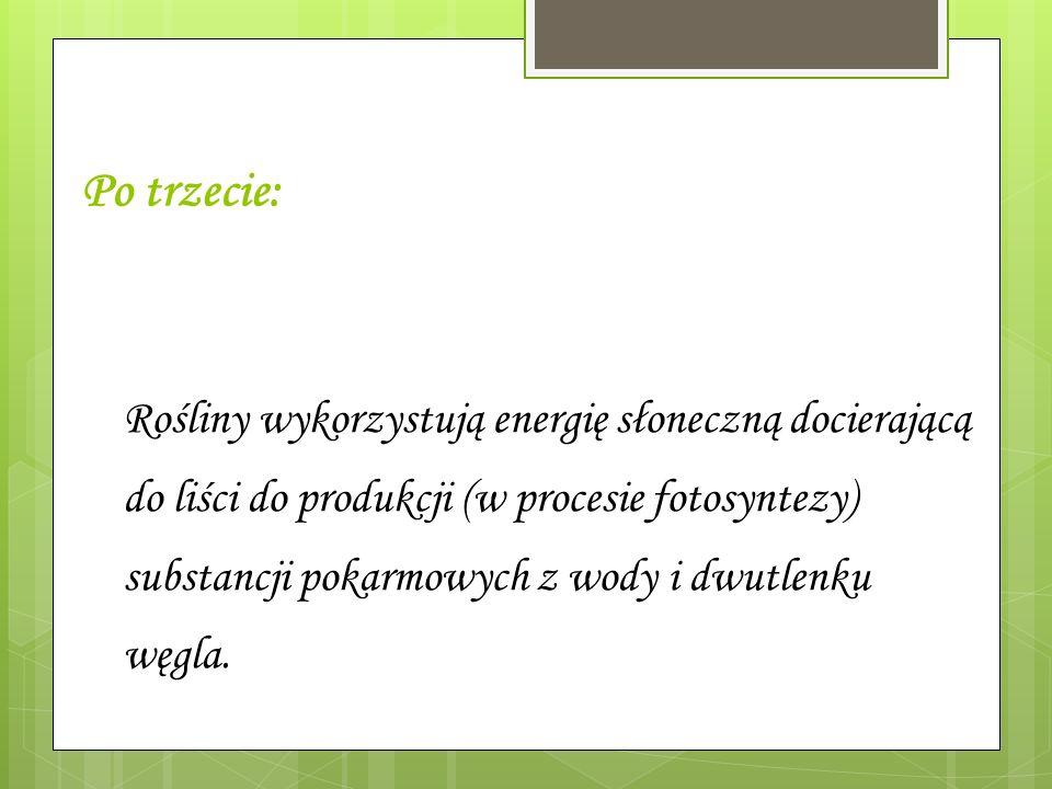 Po trzecie: Rośliny wykorzystują energię słoneczną docierającą do liści do produkcji (w procesie fotosyntezy) substancji pokarmowych z wody i dwutlenk