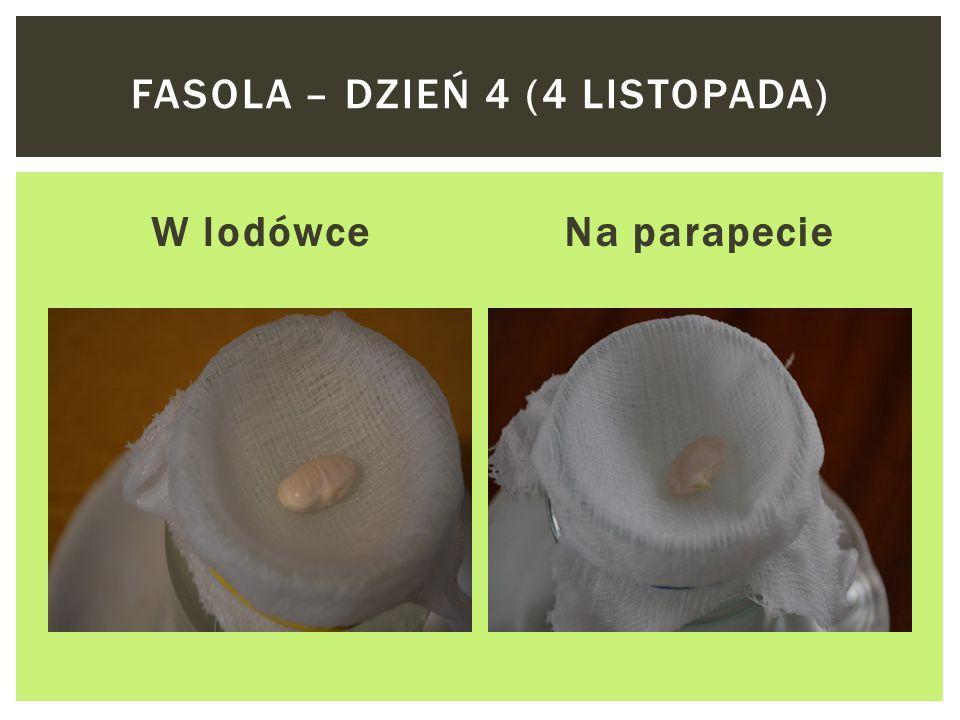 W lodówceNa parapecie FASOLA – DZIEŃ 1 (1 LISTOPADA)