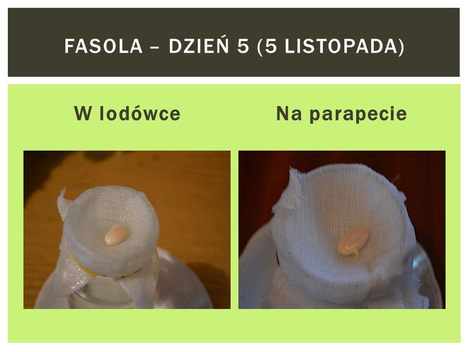 W lodówceNa parapecie FASOLA – DZIEŃ 4 (4 LISTOPADA)