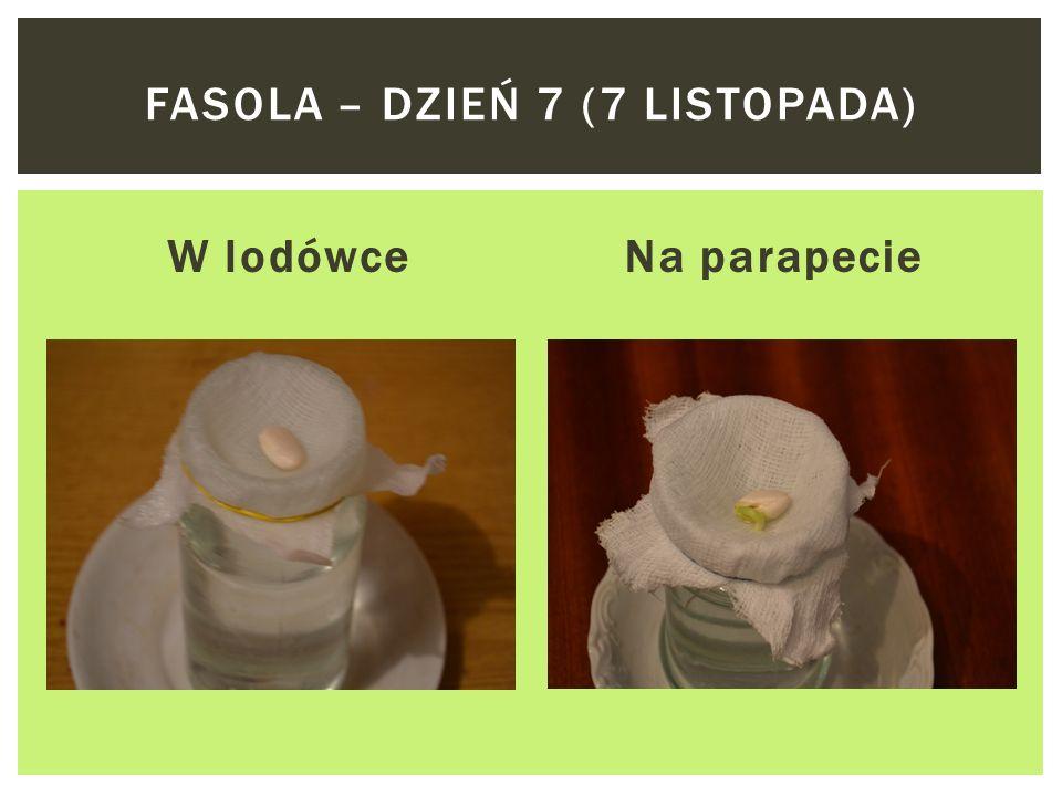 W lodówceNa parapecie FASOLA – DZIEŃ 6 (6 LISTOPADA)