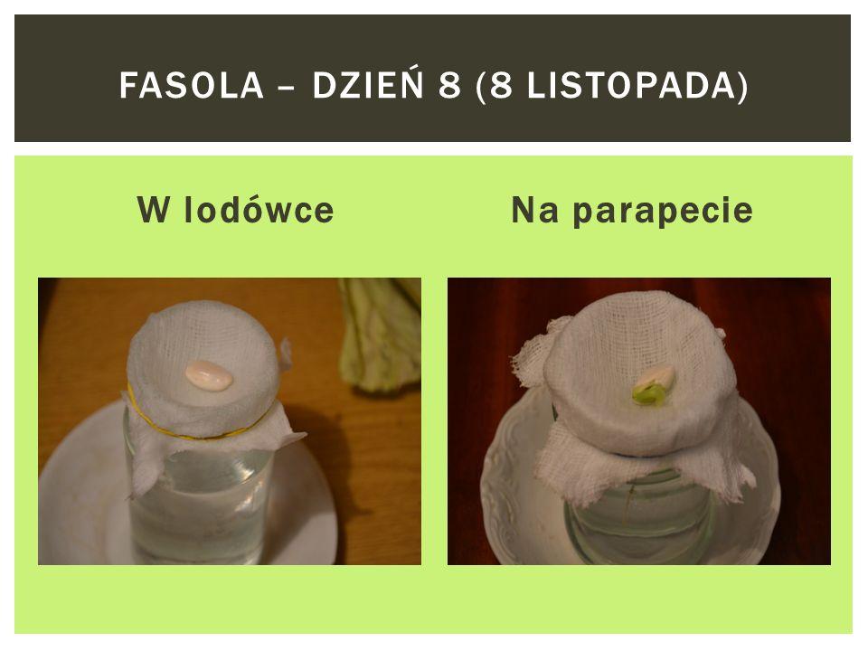 W lodówceNa parapecie FASOLA – DZIEŃ 7 (7 LISTOPADA)
