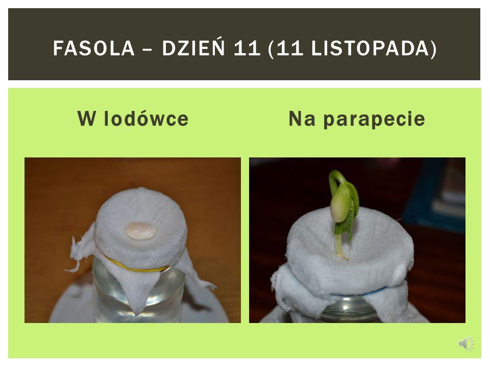 W lodówceNa parapecie FASOLA – DZIEŃ 10 (10 LISTOPADA)