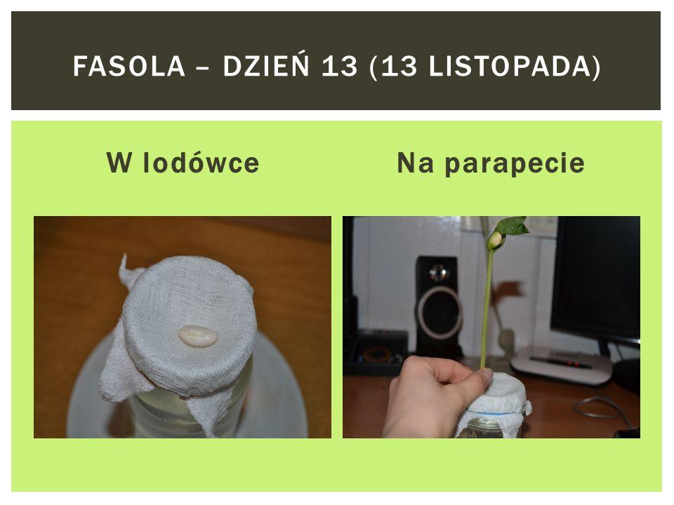 W lodówceNa parapecie FASOLA – DZIEŃ 11 (11 LISTOPADA)