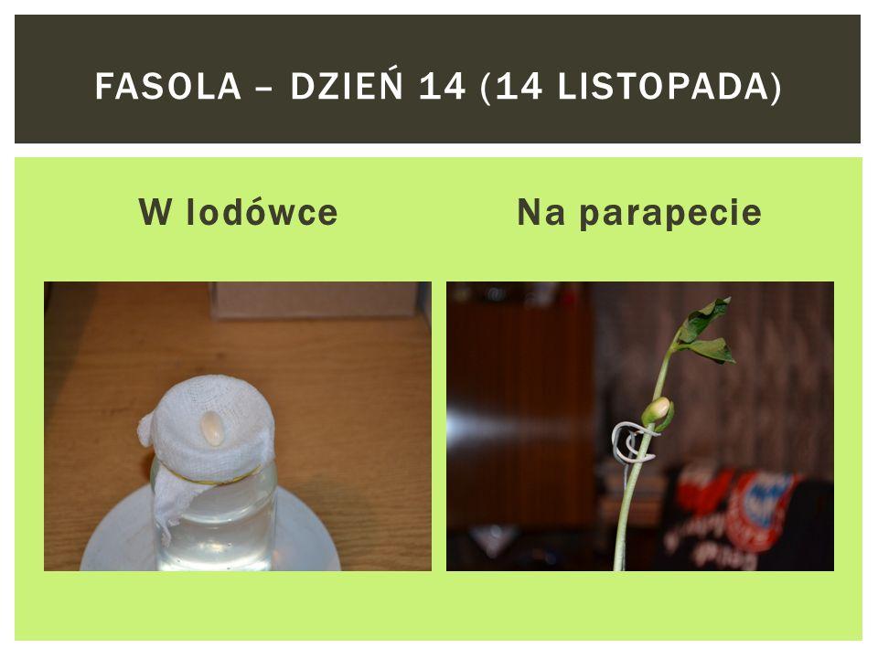 W lodówceNa parapecie FASOLA – DZIEŃ 13 (13 LISTOPADA)