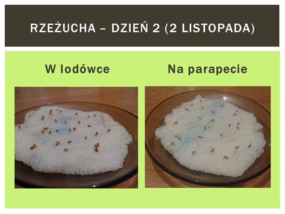 W lodówceNa parapecie RZEŻUCHA – DZIEŃ 1 (1 LISTOPADA)