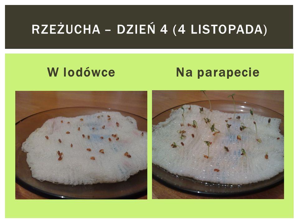 W lodówceNa parapecie RZEŻUCHA – DZIEŃ 2 (2 LISTOPADA)