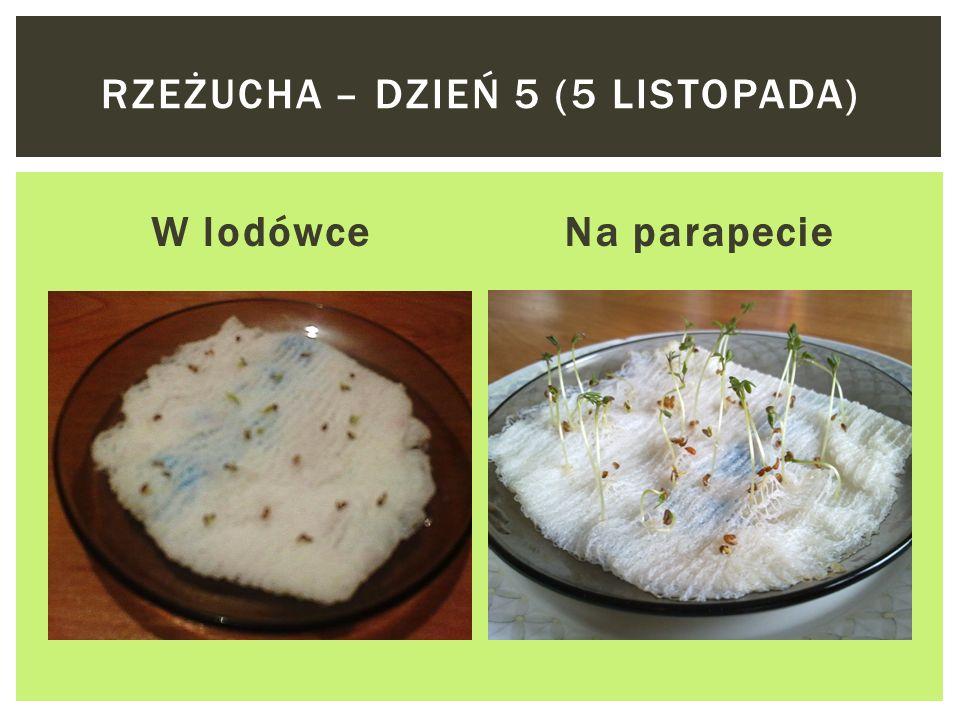 W lodówceNa parapecie RZEŻUCHA – DZIEŃ 4 (4 LISTOPADA)