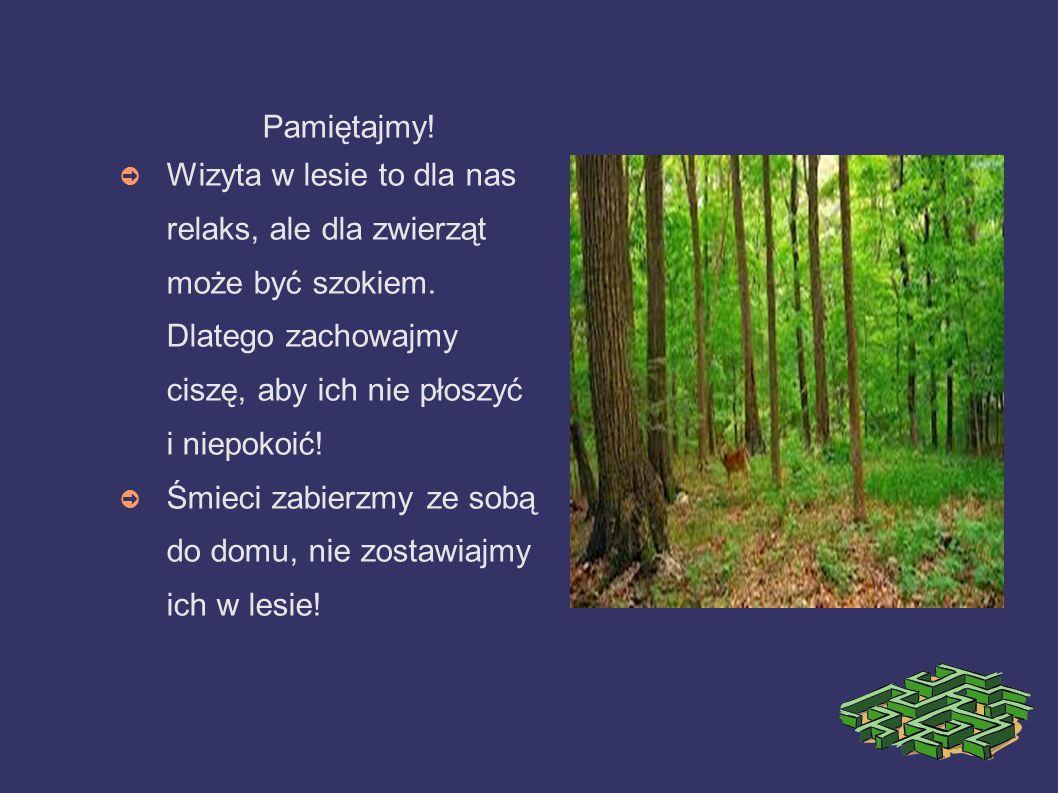 Pamiętajmy! Wizyta w lesie to dla nas relaks, ale dla zwierząt może być szokiem. Dlatego zachowajmy ciszę, aby ich nie płoszyć i niepokoić! Śmieci zab