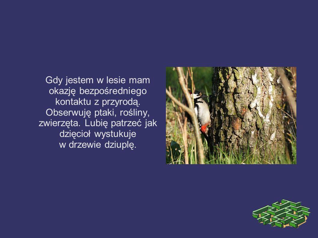 Gdy jestem w lesie mam okazję bezpośredniego kontaktu z przyrodą. Obserwuję ptaki, rośliny, zwierzęta. Lubię patrzeć jak dzięcioł wystukuje w drzewie