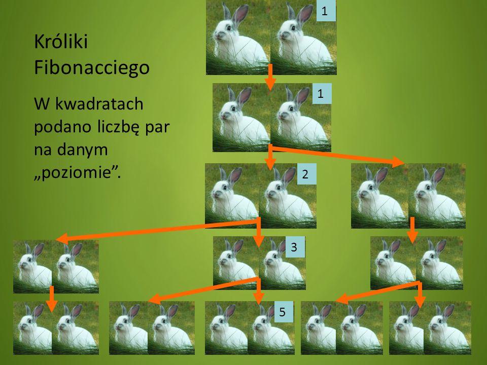Króliki Fibonacciego W kwadratach podano liczbę par na danym poziomie. 1 1 2 3 5