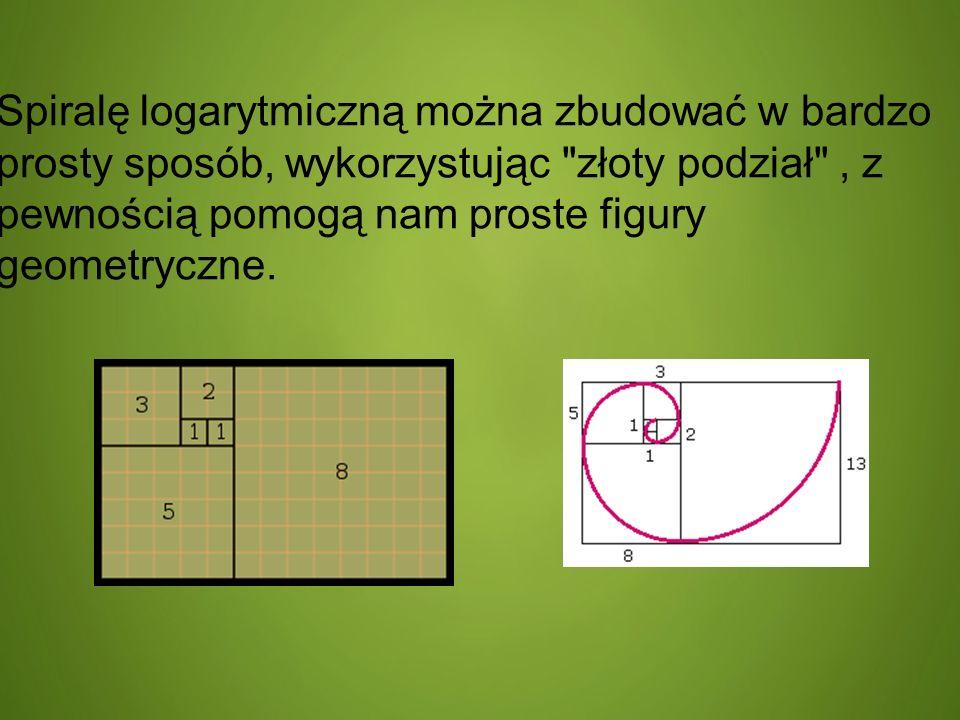 Spiralę logarytmiczną można zbudować w bardzo prosty sposób, wykorzystując