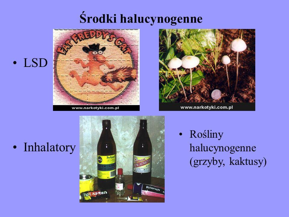 Środki halucynogenne LSD Inhalatory Rośliny halucynogenne (grzyby, kaktusy)
