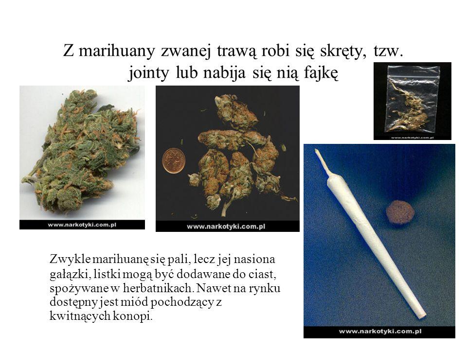 Z marihuany zwanej trawą robi się skręty, tzw. jointy lub nabija się nią fajkę Zwykle marihuanę się pali, lecz jej nasiona gałązki, listki mogą być do