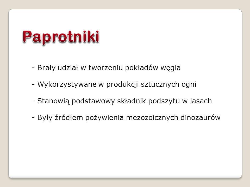 - Brały udział w tworzeniu pokładów węgla - Wykorzystywane w produkcji sztucznych ogni - Stanowią podstawowy składnik podszytu w lasach - Były źródłem