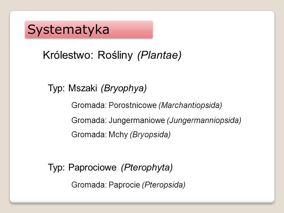 Systematyka Królestwo: Rośliny (Plantae) Typ: Mszaki (Bryophya) Gromada: Porostnicowe (Marchantiopsida) Gromada: Jungermaniowe (Jungermanniopsida) Gro