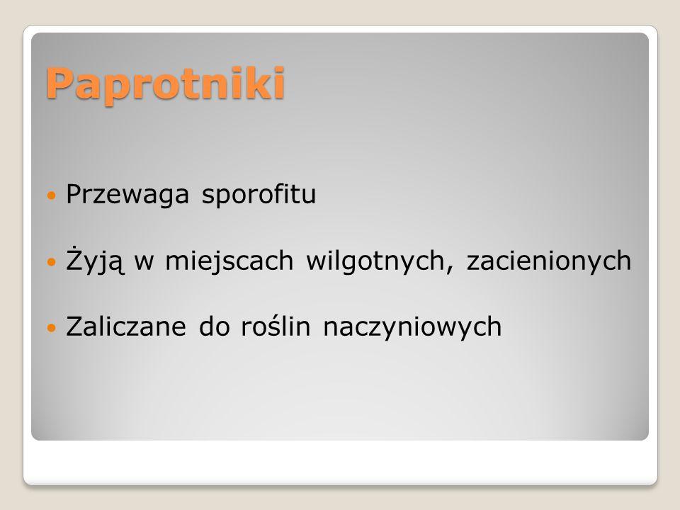 Strony www http://portalwiedzy.onet.pl/14066,1,1,1,galeria.html http://alternative4p2.blox.pl/2006/02/wpis-38.html http://orl.amg.gda.pl/kolekcje%202004/Dryopteris%20fi lix-mas.jpg http://orl.amg.gda.pl/kolekcje%202004/Dryopteris%20fi lix-mas.jpg http://www.meemelink.com/prints%20pages/20158.mus ci%20-%20Polytrichum%20commune.htm http://www.meemelink.com/prints%20pages/20158.mus ci%20-%20Polytrichum%20commune.htm http://pl.wikipedia.org/wiki/Nerecznica_samcza http://pl.wikipedia.org/wiki/Gametofit http://concise.britannica.com/ebc/article-9364349/fern http://users.rcn.com/jkimball.ma.ultranet/BiologyPages/ M/Mosses.html http://users.rcn.com/jkimball.ma.ultranet/BiologyPages/ M/Mosses.html