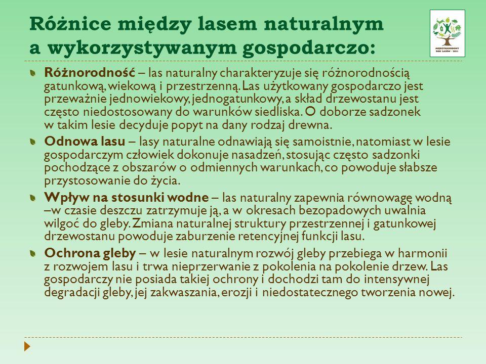 Różnice między lasem naturalnym a wykorzystywanym gospodarczo: Różnorodność – las naturalny charakteryzuje się różnorodnością gatunkową, wiekową i prz