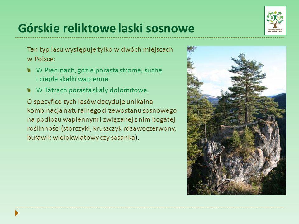 Górskie reliktowe laski sosnowe Ten typ lasu występuje tylko w dwóch miejscach w Polsce: W Pieninach, gdzie porasta strome, suche i ciepłe skałki wapi