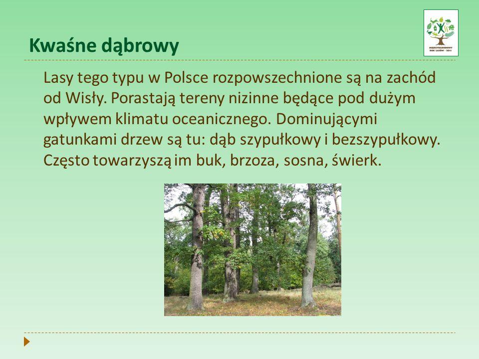 Kwaśne dąbrowy Lasy tego typu w Polsce rozpowszechnione są na zachód od Wisły. Porastają tereny nizinne będące pod dużym wpływem klimatu oceanicznego.
