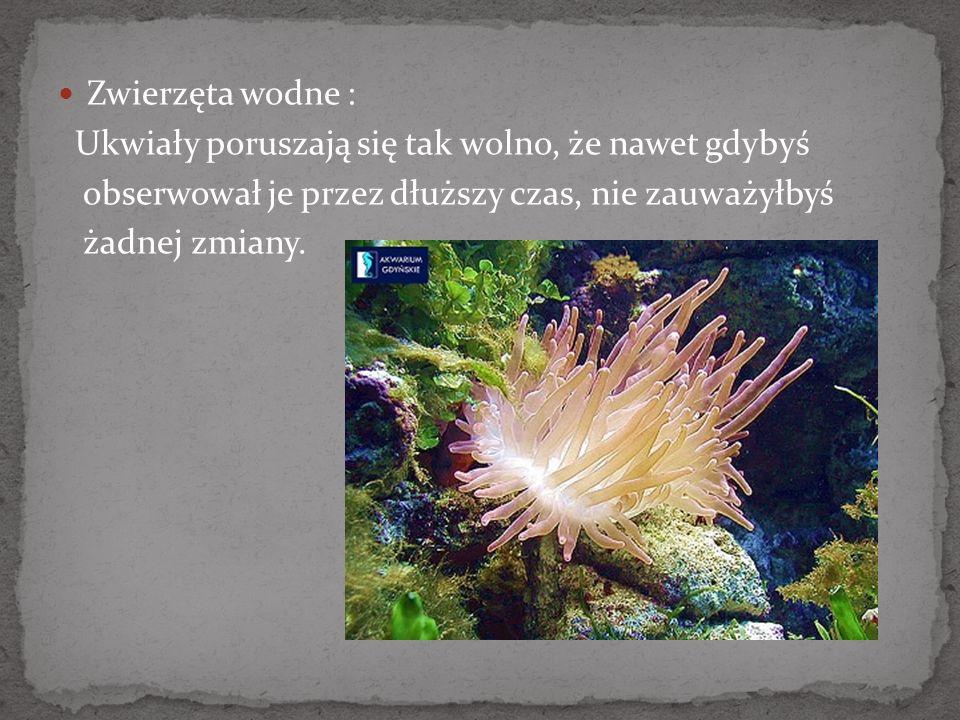 Zwierzęta wodne : Ukwiały poruszają się tak wolno, że nawet gdybyś obserwował je przez dłuższy czas, nie zauważyłbyś żadnej zmiany.