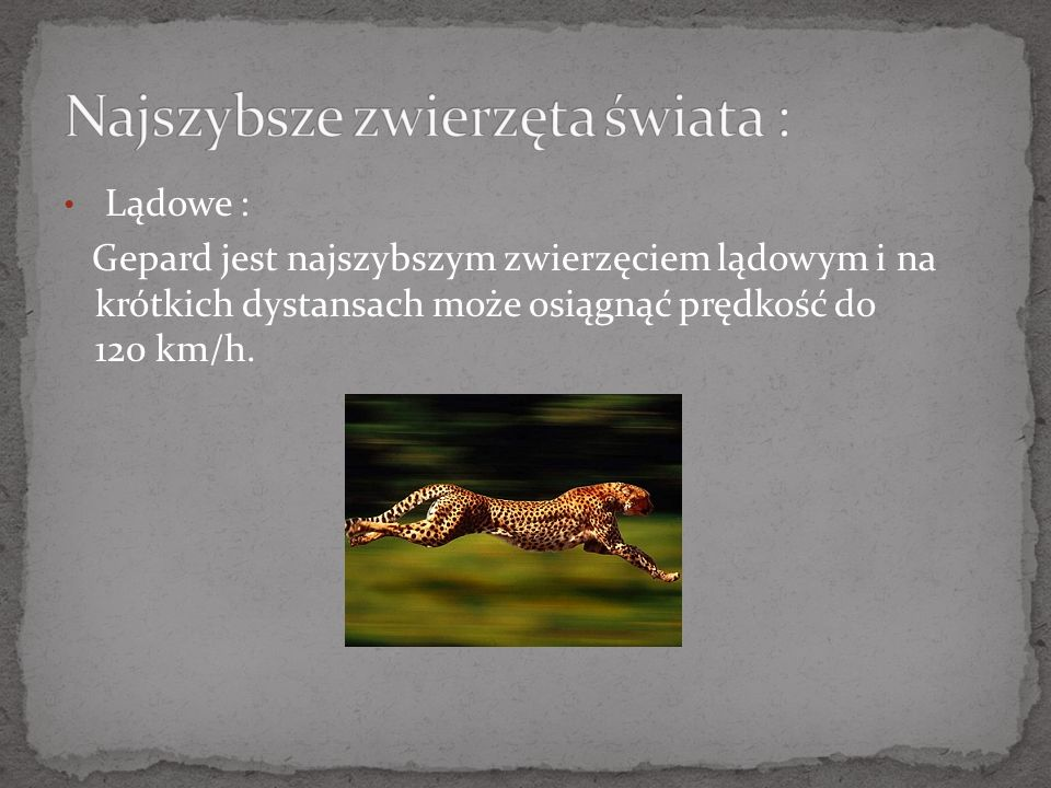 Lądowe : Gepard jest najszybszym zwierzęciem lądowym i na krótkich dystansach może osiągnąć prędkość do 120 km/h.