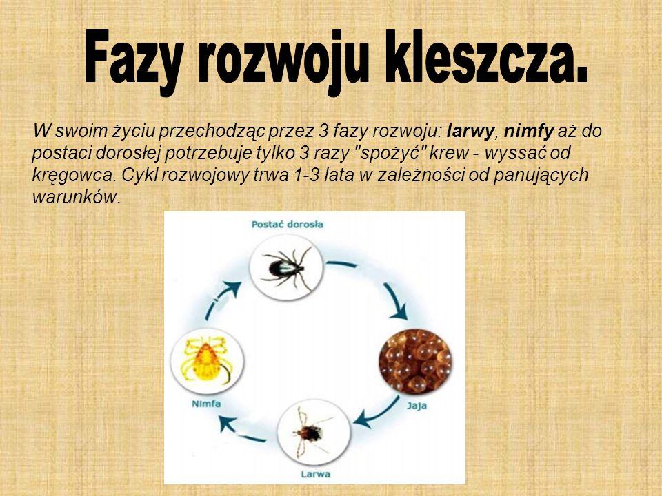 W swoim życiu przechodząc przez 3 fazy rozwoju: larwy, nimfy aż do postaci dorosłej potrzebuje tylko 3 razy