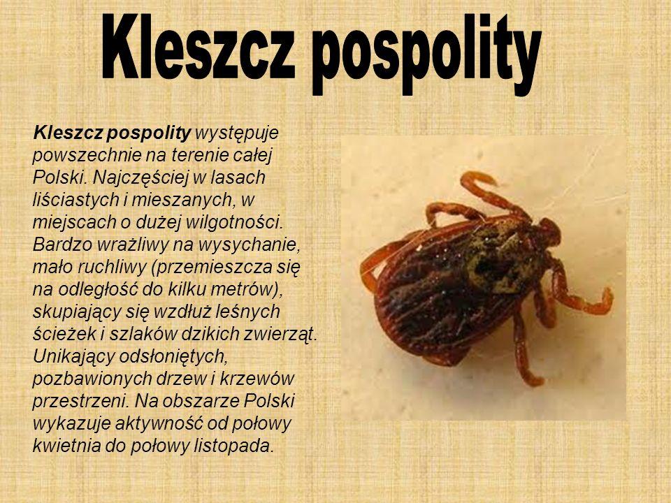 Kleszcz pospolity występuje powszechnie na terenie całej Polski. Najczęściej w lasach liściastych i mieszanych, w miejscach o dużej wilgotności. Bardz