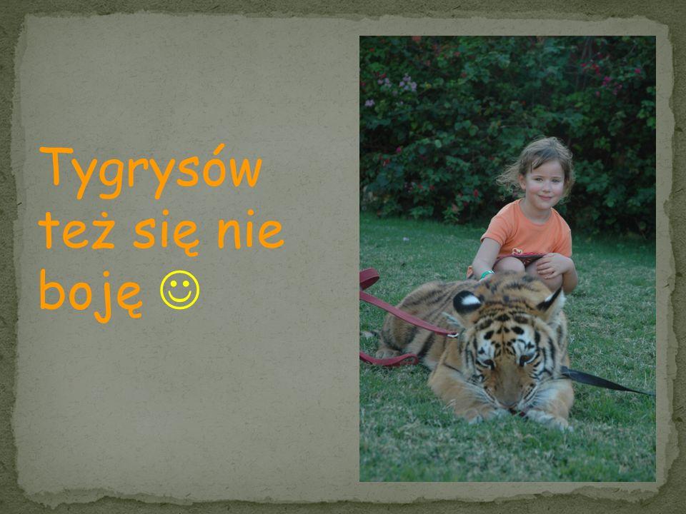 Tygrysów też się nie boję