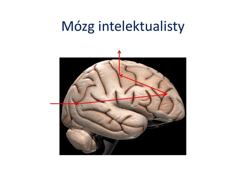 Mózg intelektualisty