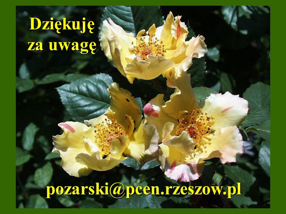 Dziękuję za uwagę pozarski@pcen.rzeszow.pl