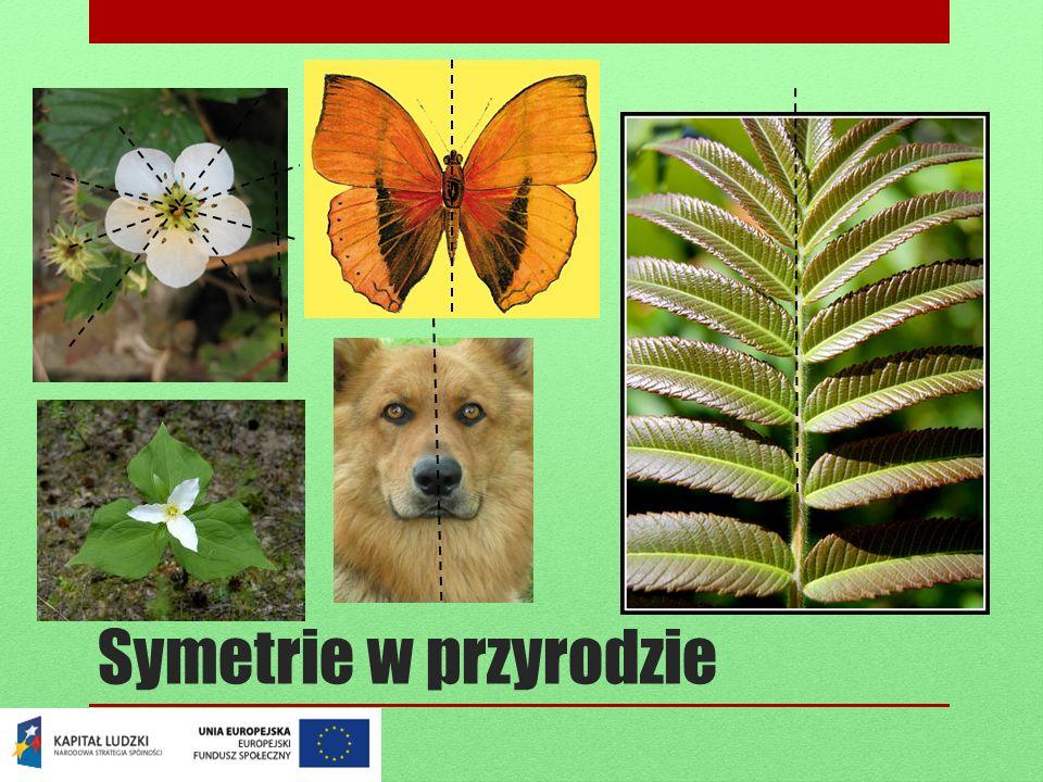 Symetrie w przyrodzie