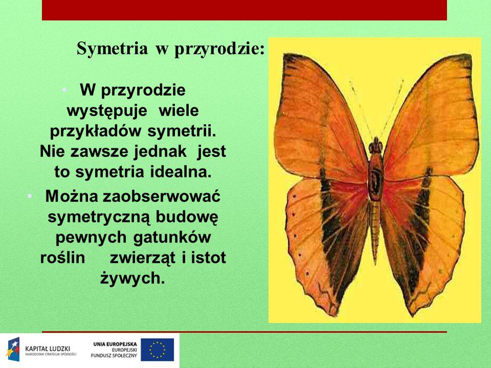 Symetria w przyrodzie: W przyrodzie występuje wiele przykładów symetrii. Nie zawsze jednak jest to symetria idealna. Można zaobserwować symetryczną bu