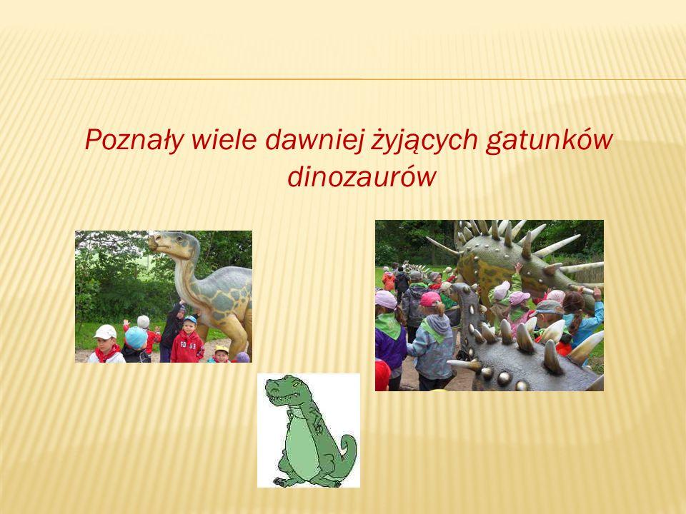 Poznały wiele dawniej żyjących gatunków dinozaurów
