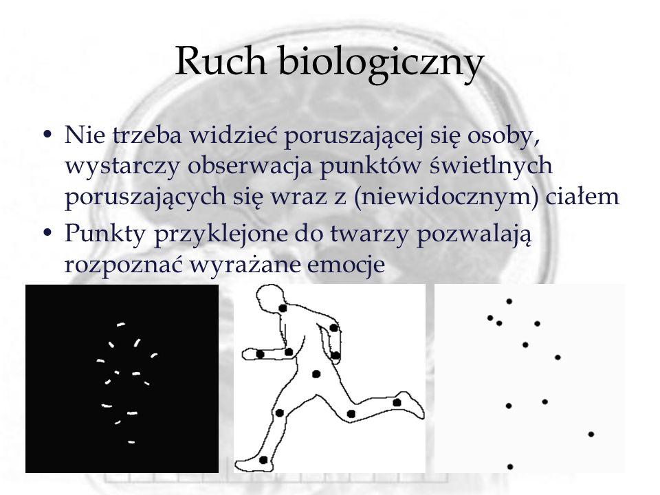 Ruch biologiczny Nie trzeba widzieć poruszającej się osoby, wystarczy obserwacja punktów świetlnych poruszających się wraz z (niewidocznym) ciałem Pun