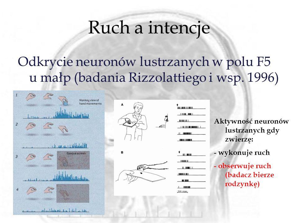 Ruch a intencje Odkrycie neuronów lustrzanych w polu F5 u małp (badania Rizzolattiego i wsp. 1996) Aktywność neuronów lustrzanych gdy zwierzę: - wykon