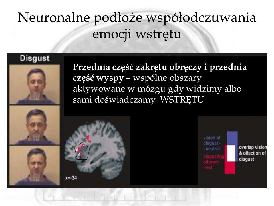 Neuronalne podłoże współodczuwania emocji wstrętu Przednia część zakrętu obręczy i przednia część wyspy – wspólne obszary aktywowane w mózgu gdy widzimy albo sami doświadczamy WSTRĘTU